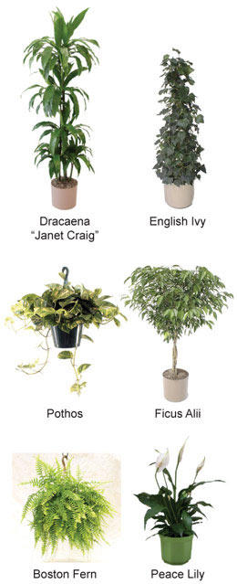 10 plants that will clean and purify the air in your home - House plants names and pictures ...